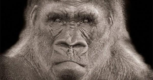 20110820-gorila.jpg